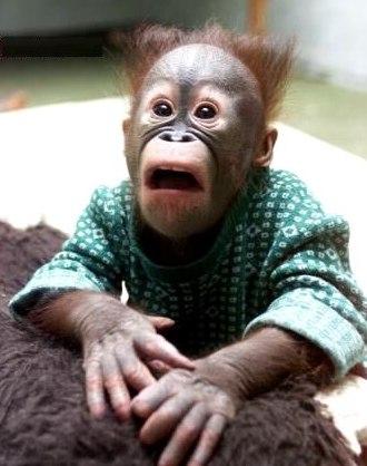 funny-ape
